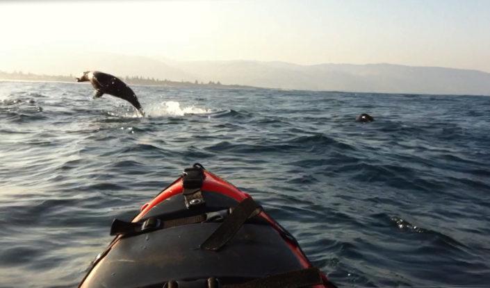 seal-kayaking